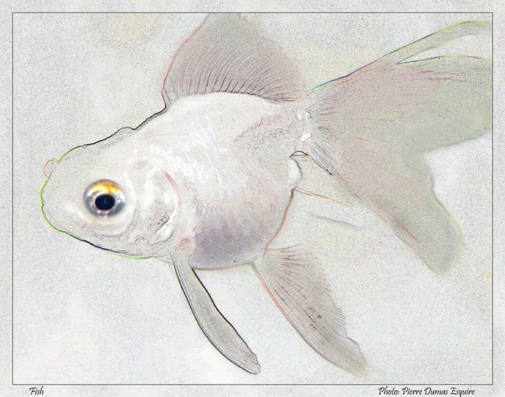 FISH FINDS EDGES by Pierre Dumas
