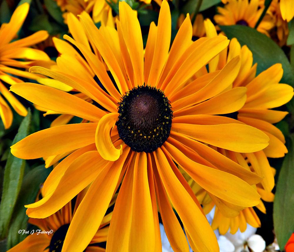 Yellow Yellow by patjfalvey