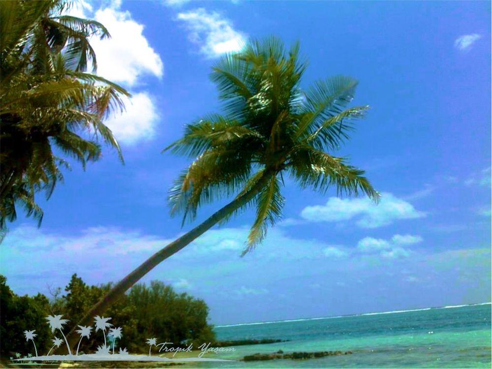 beach by tropikyasam