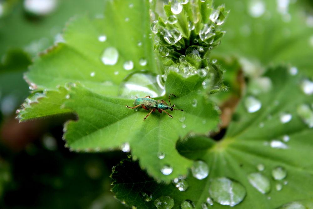 Photo in Random #bug #käfer #drops #tropfen #wasser #water