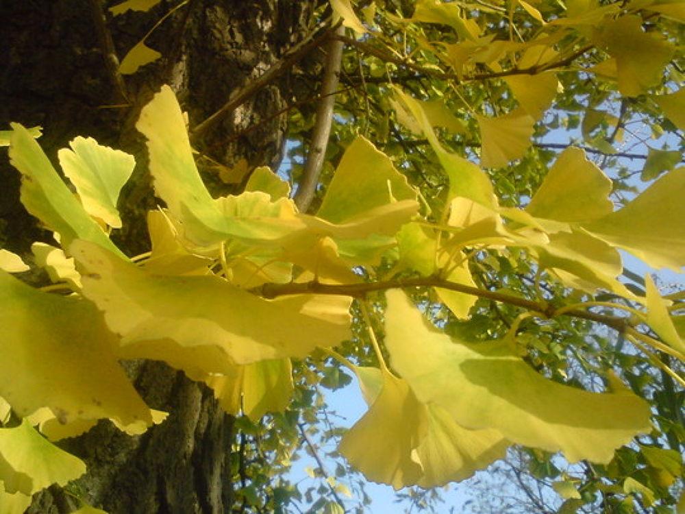 Őszi levelek - autumn Leaves by nnzsoka