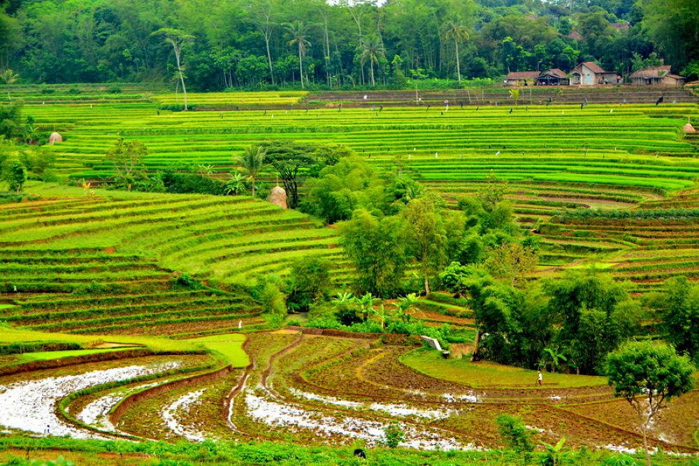 my village by Andi kho