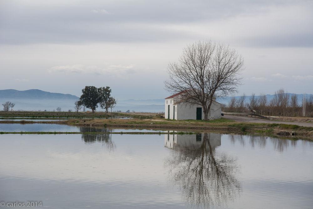 Arrozales en el Delta del Ebro by carlos