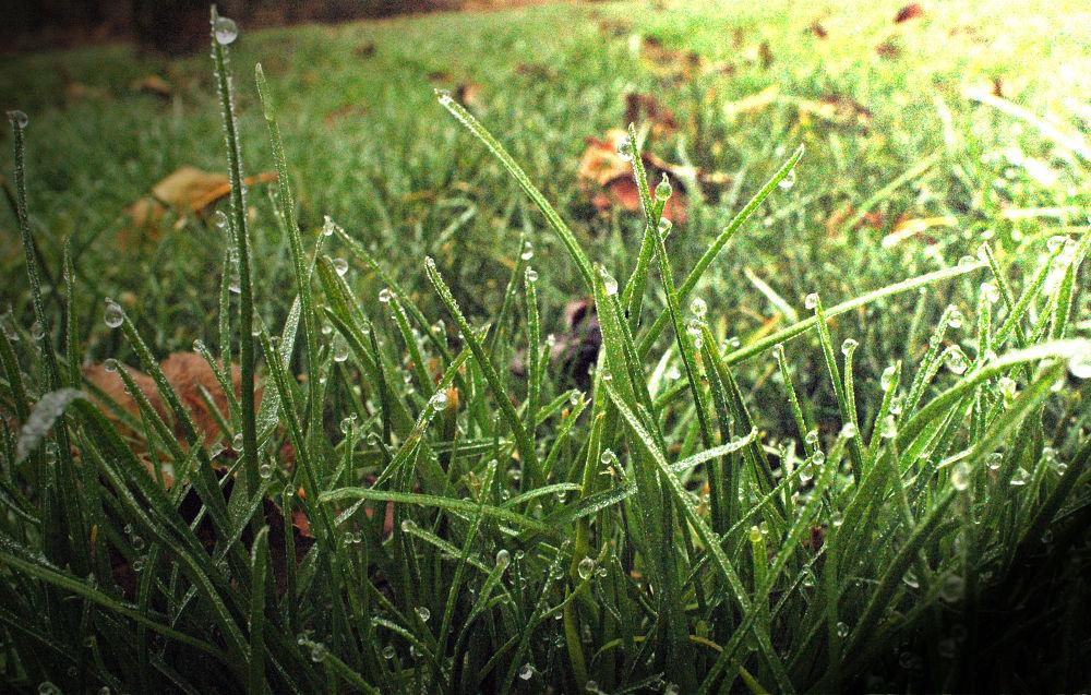 Frozen Dew Drops by digipro