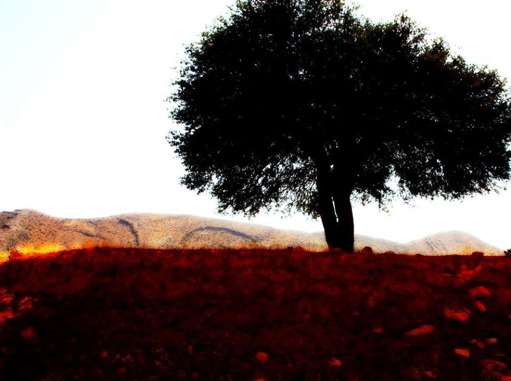 image by Sara SepehrAra