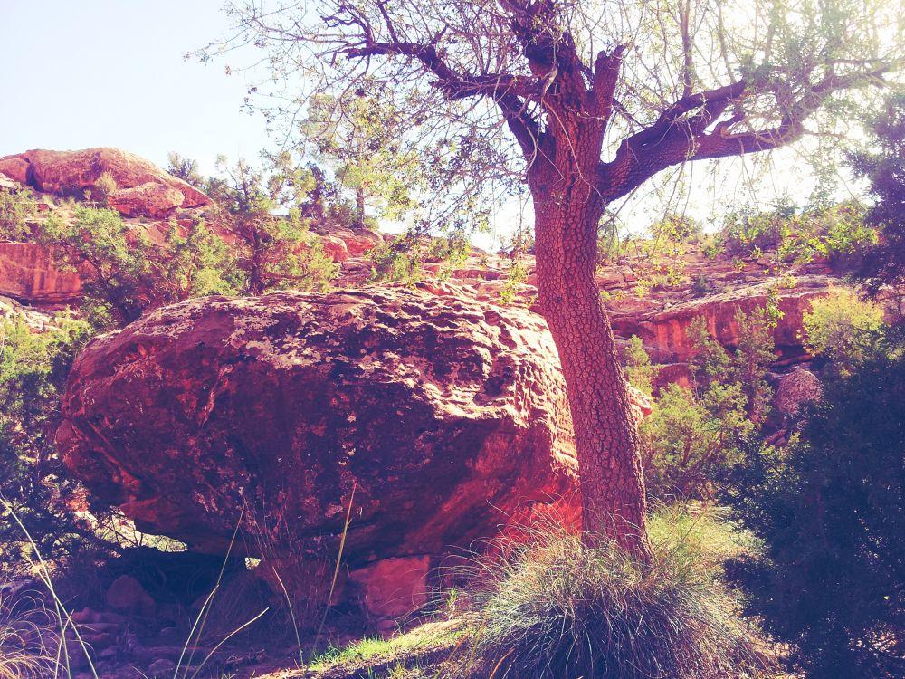 ROCK TREE by snouzika
