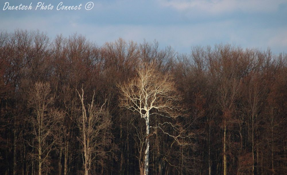My white treespot by Duentsch Photo Connect
