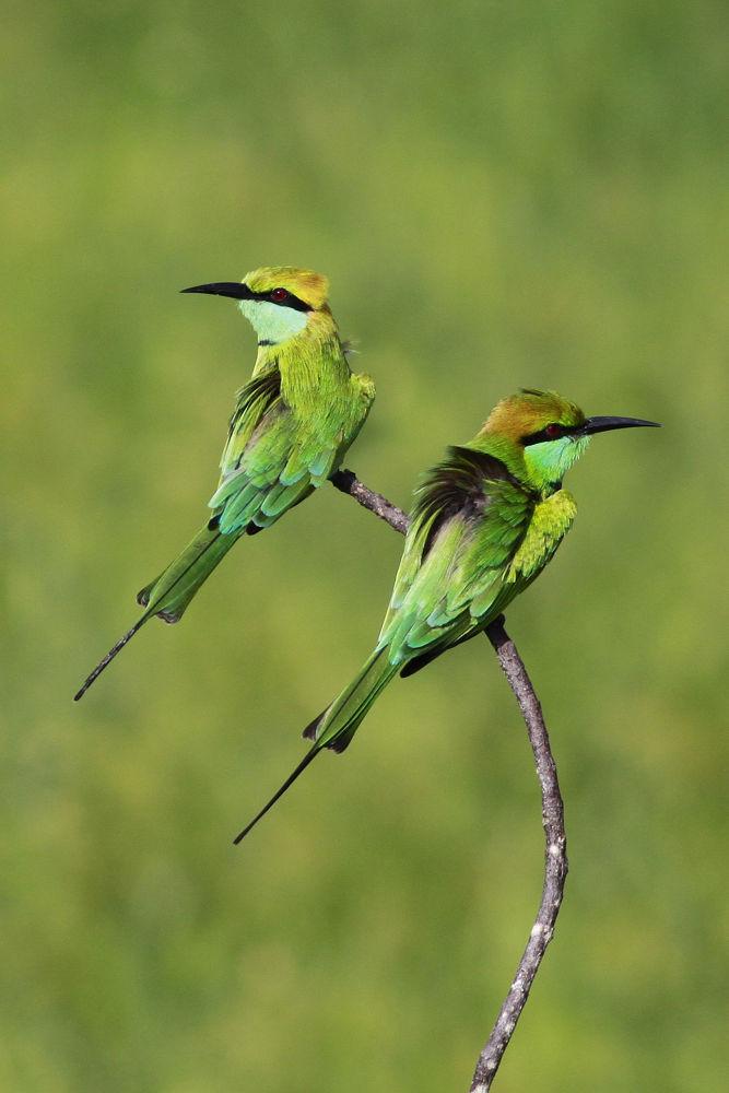 Green & Green by charith pubudu lakmal