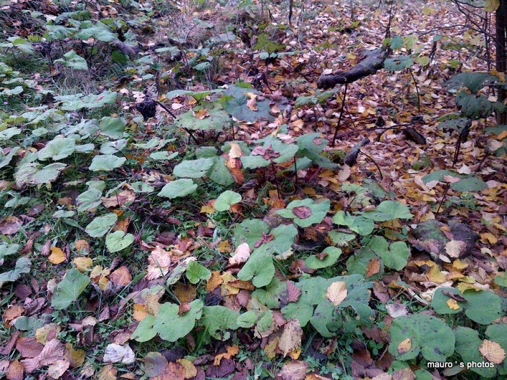 autunno by maurobarsi7