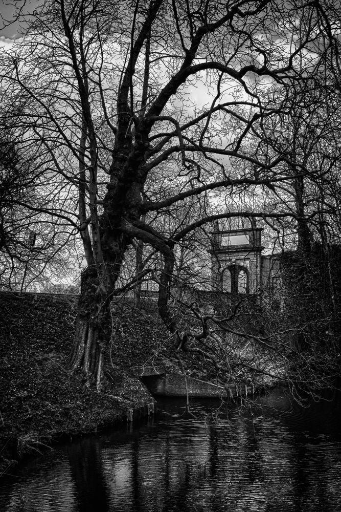 The Wicker Tree by Serge
