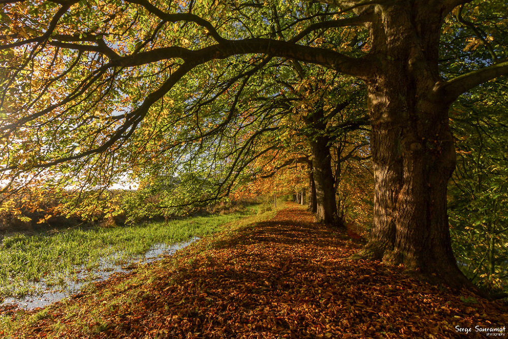 autumn colors by Serge