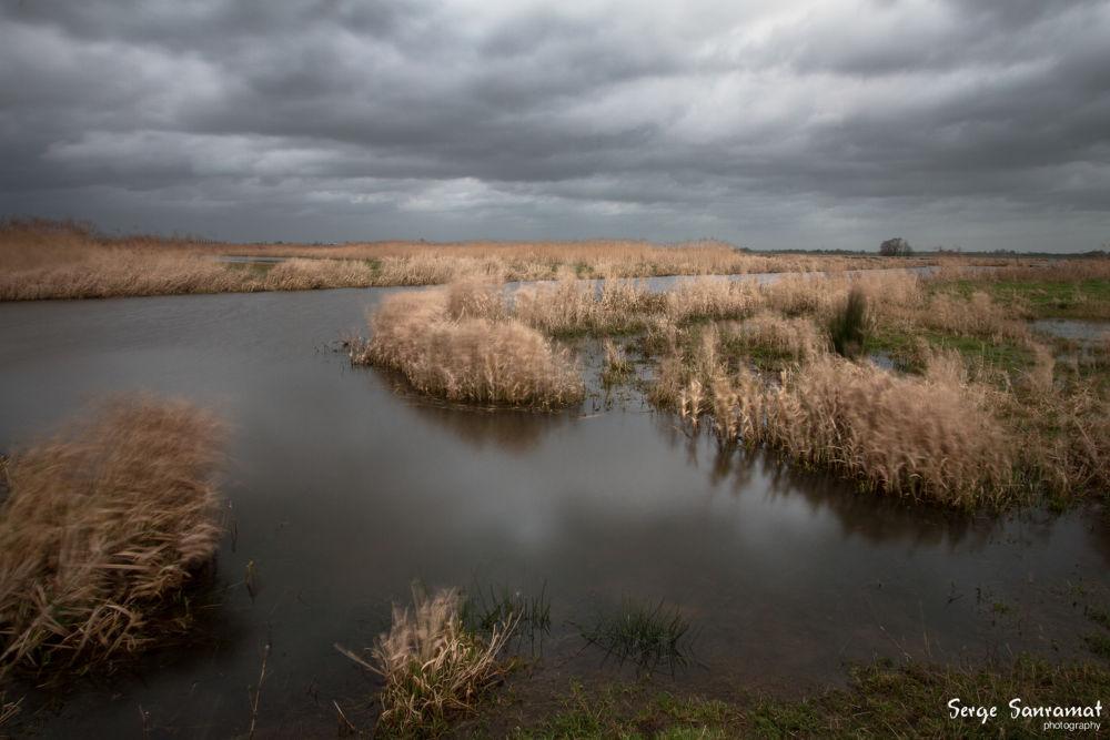 Photo in Landscape #nieuwkoopse plassen #storm #nature
