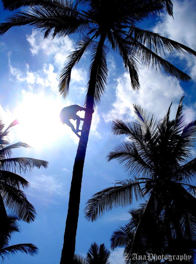 Coconut palm tree and a man- Kenya! by Zec Ana