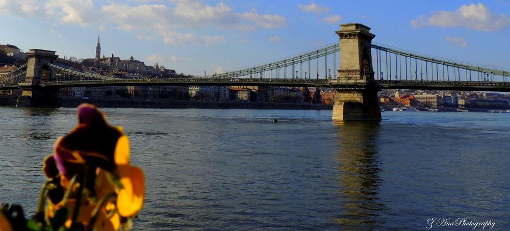 Dunav - Budapest  by Zec Ana