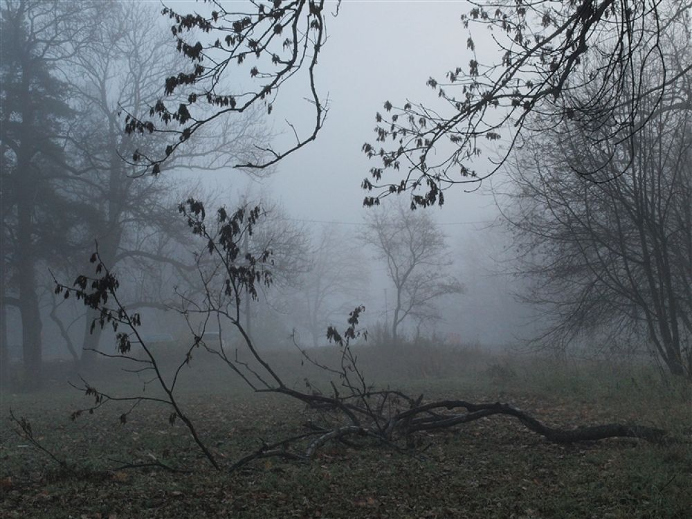 Foggy Morning by outidebnam