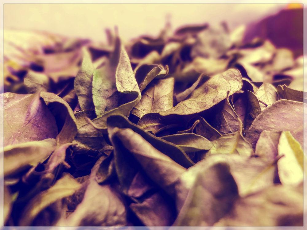 Dry Leaves by Harsh shukla