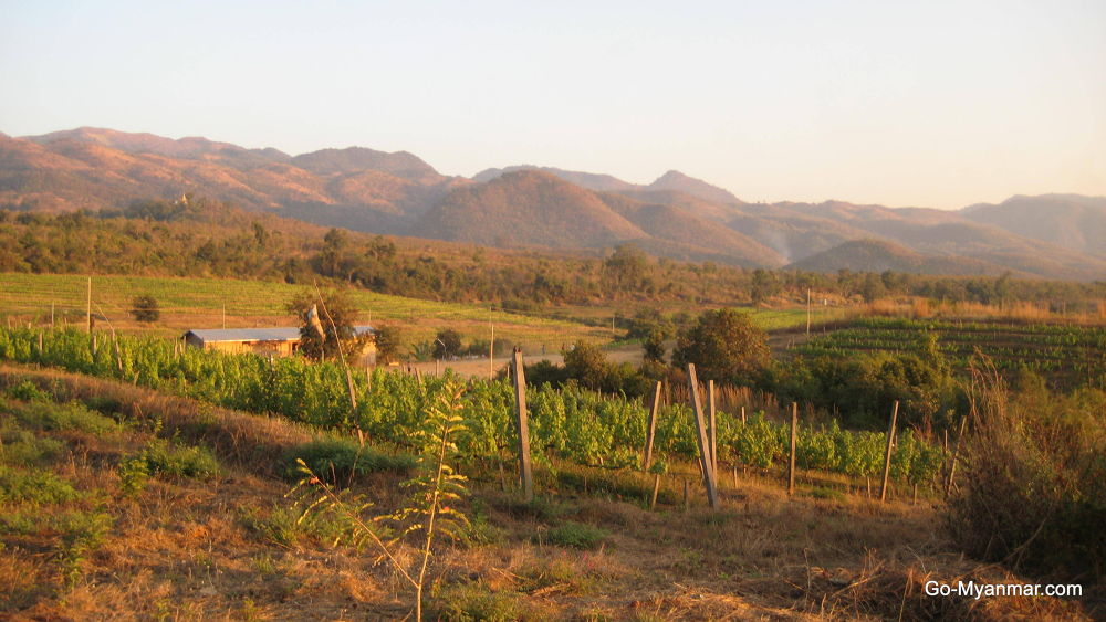 Red Mountain Estate vineyard, Inle Lake by Go-Myanmar.com