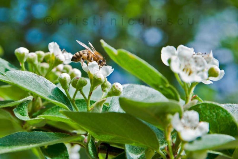 Pollination by Cristi Niculescu