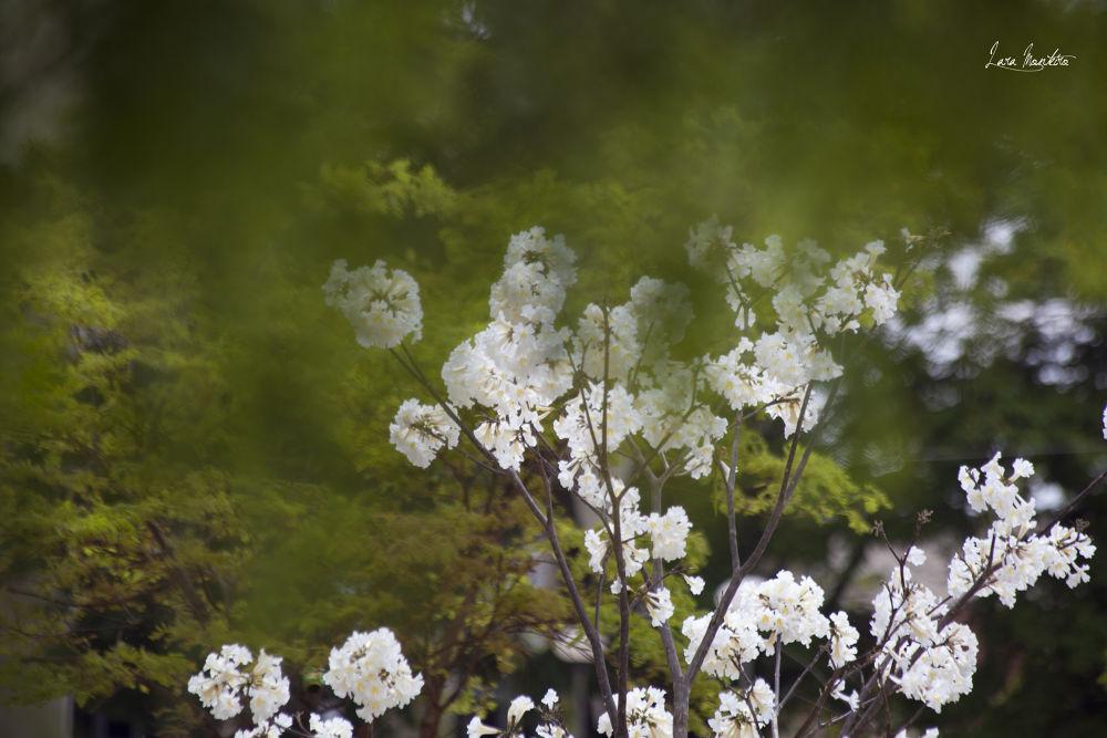 Photo in Nature #nature #branco