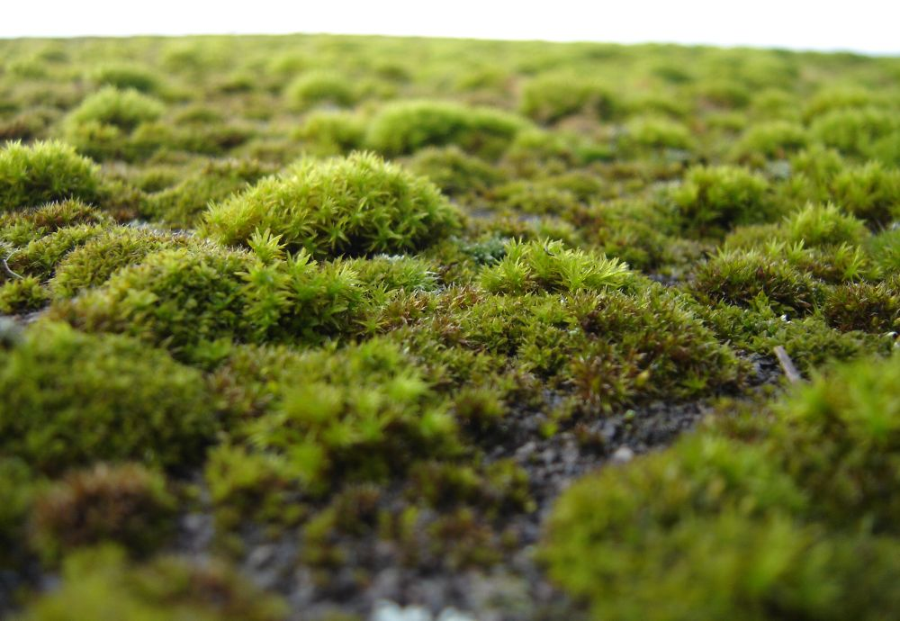 A bed of Moss by Chibi Fuji