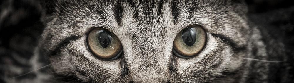 Photo in Random #cat