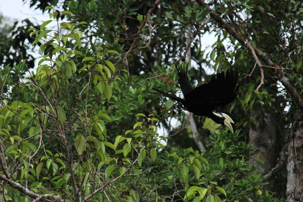 Photo in Animal #nature #birds #animal #wildlife #outdoor #borneo #kalimantan #jungle #tour