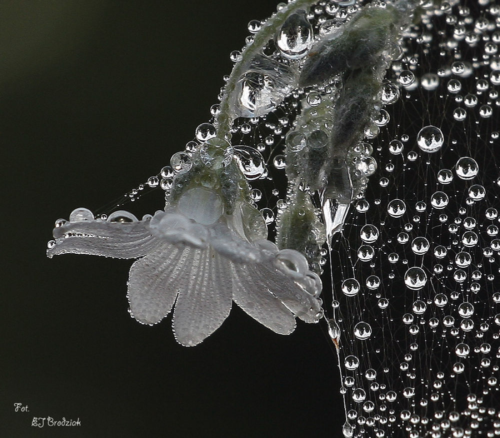 kwiatttttt by Ewa Jolanta Brodziak