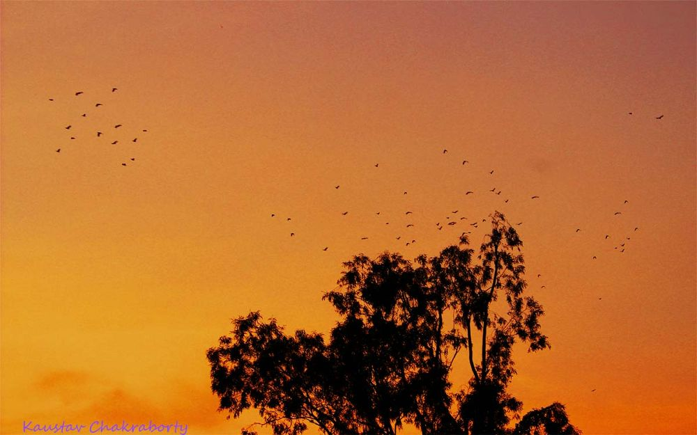 Lets Go Home by Kaustav Chakraborty