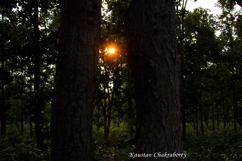 In the Forest... by Kaustav Chakraborty