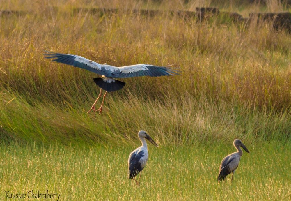 2014 (Asian Openbill) is Waiting for Landing.... Have A Nice Last Day of 2013 to all my Fans & viewe by Kaustav Chakraborty