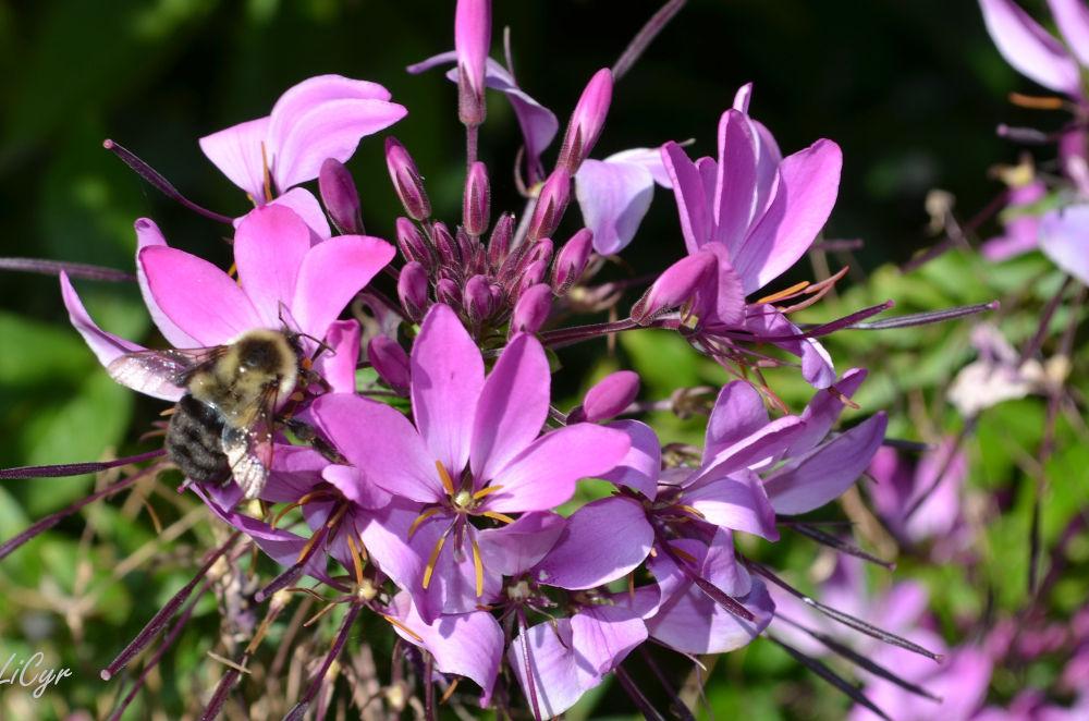 fleurs by lisecyr
