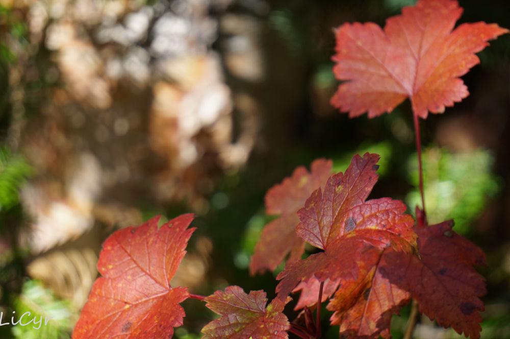 automne by lisecyr