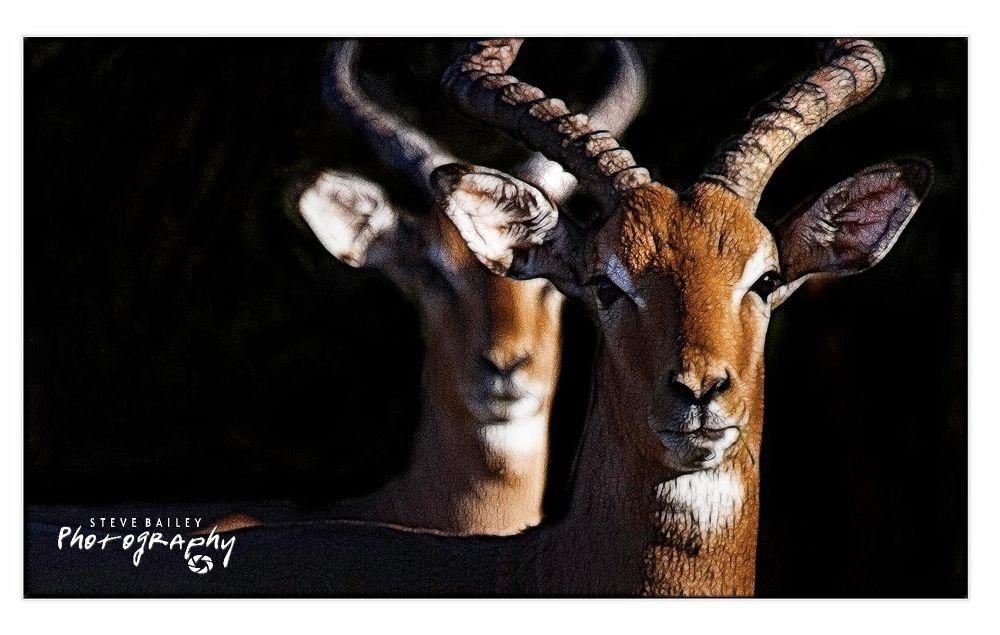 Impala in the night  by SteveBailey