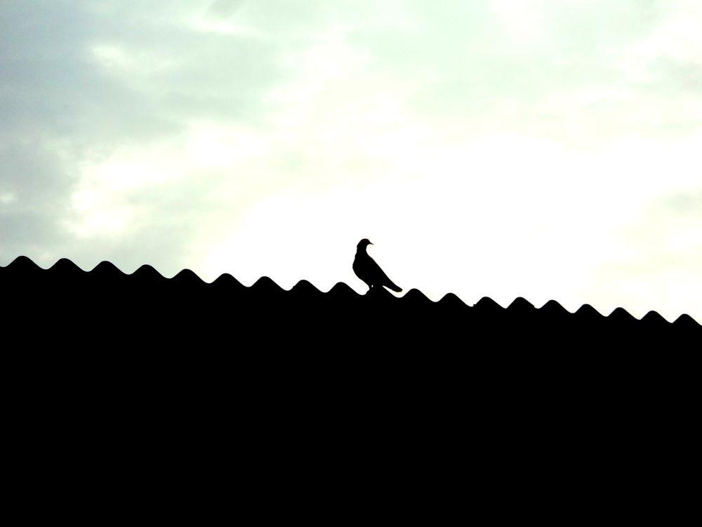 Dove by Hardik Dave