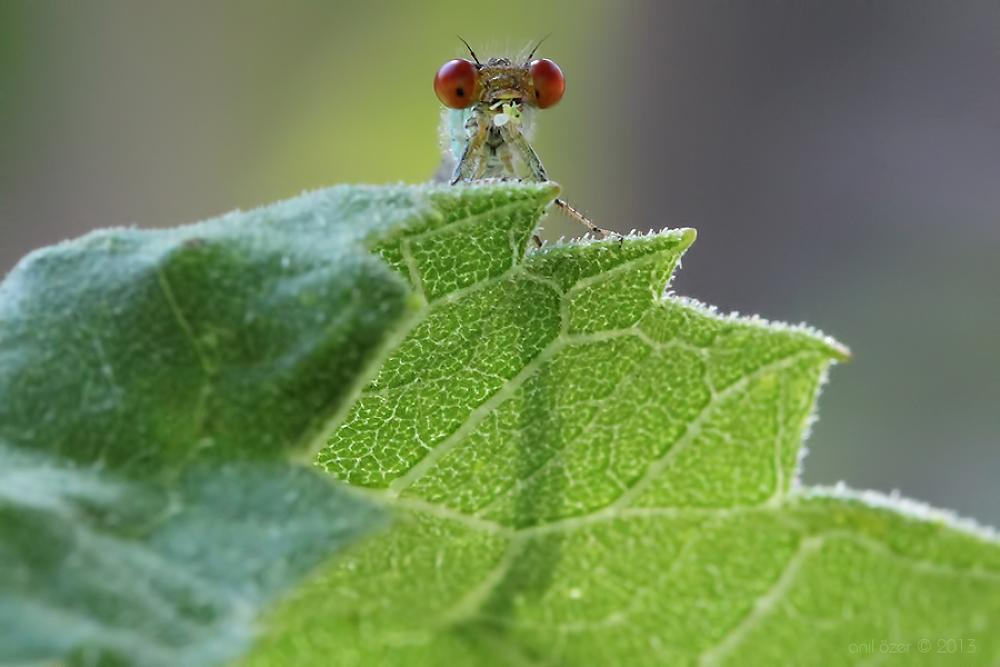 Photo in Macro #damselfy #macro #nature #insect