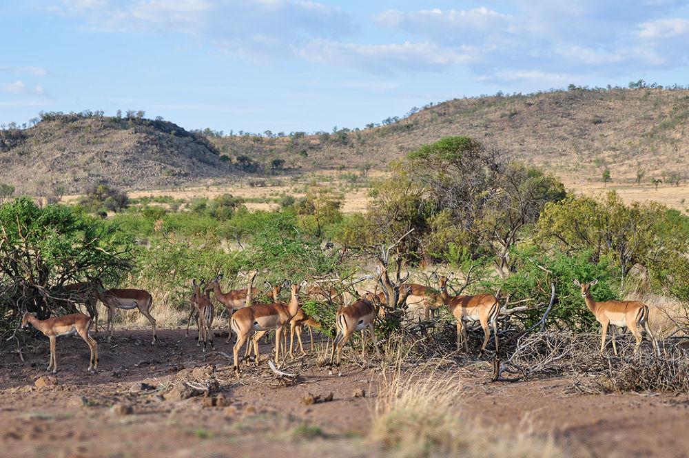 Pilanesberg 02 by Richard George Davis
