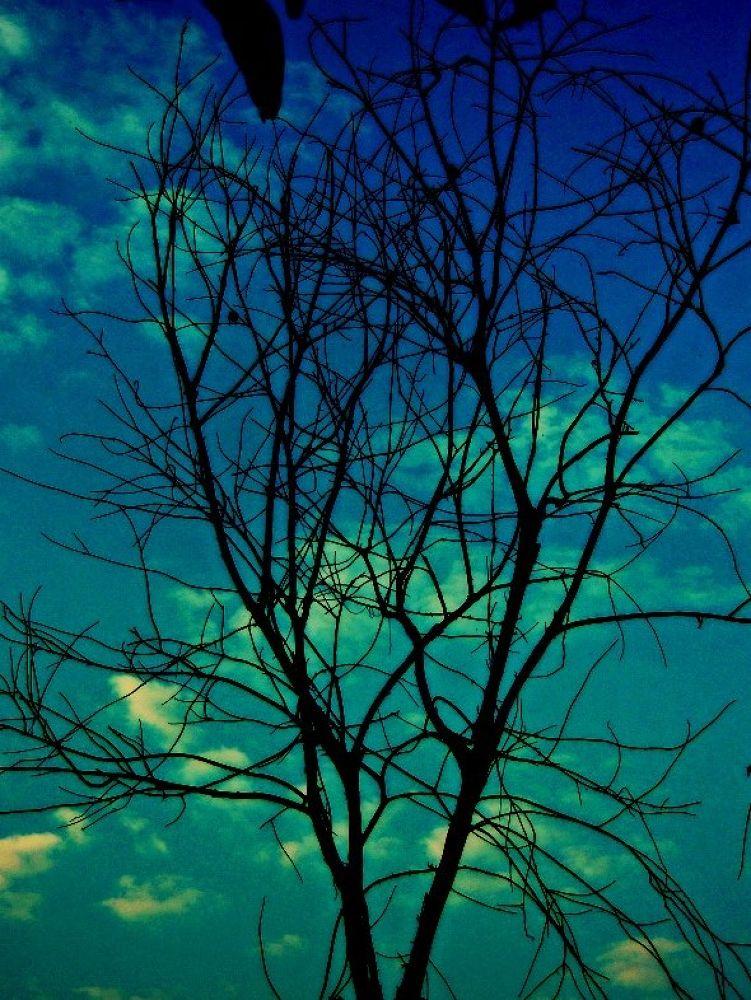 DSCN6960 by aarti swami