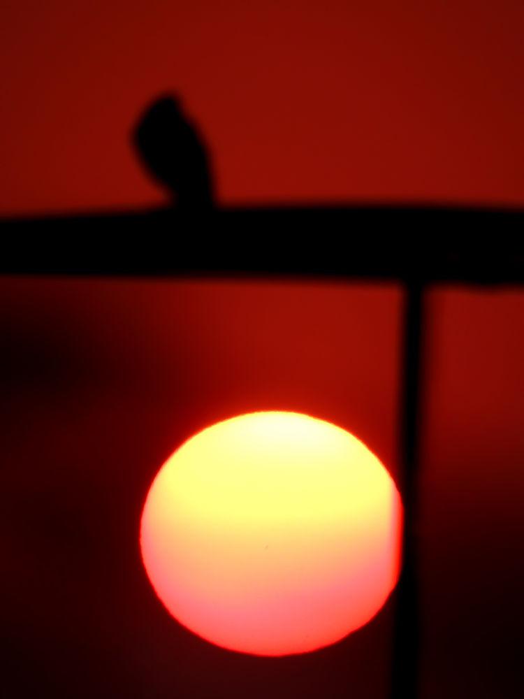 DSCN9179 by aarti swami