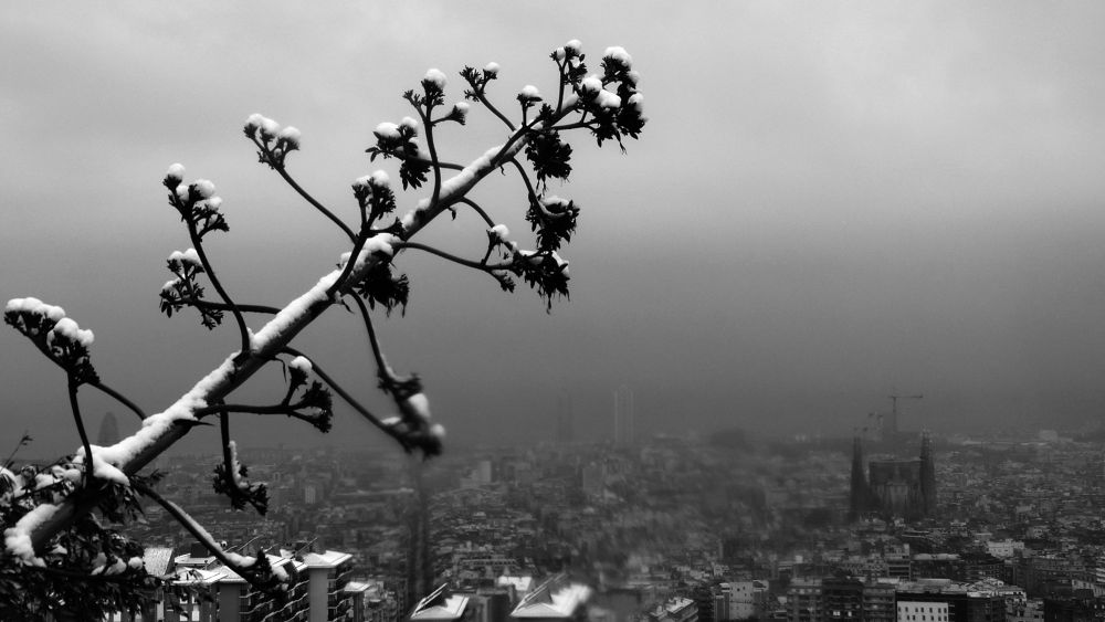 Photo in Landscape #barcelona #snow #black and white