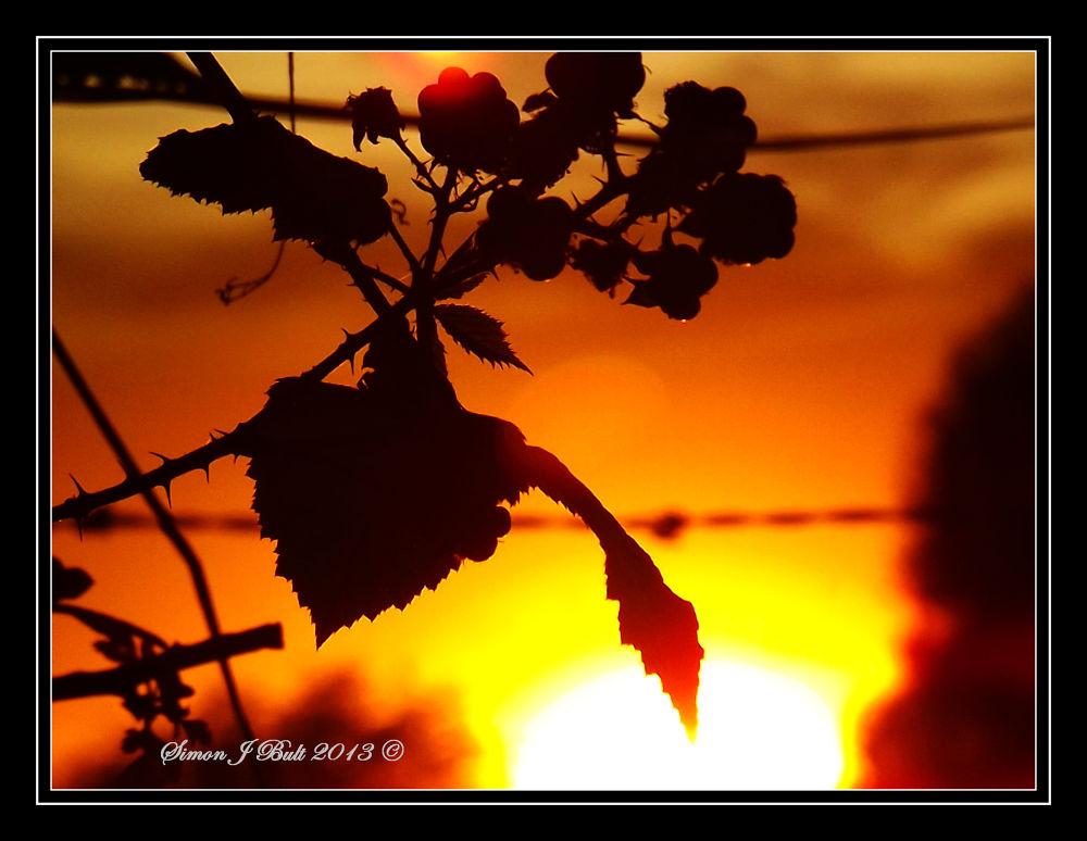 Autumn Berries  by Simon Bult