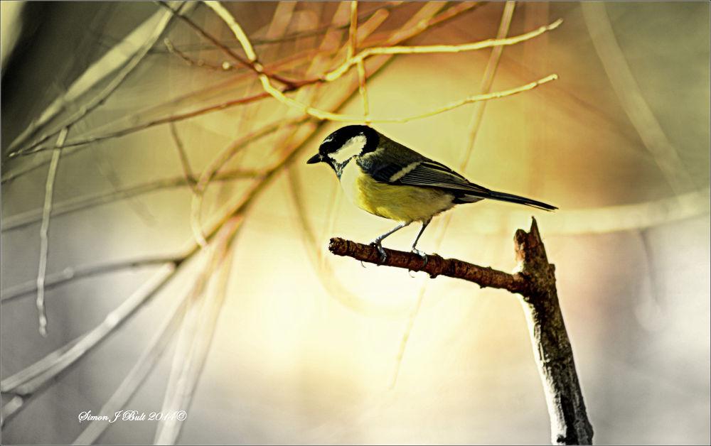 """Springtime's messenger..."" by Simon Bult"