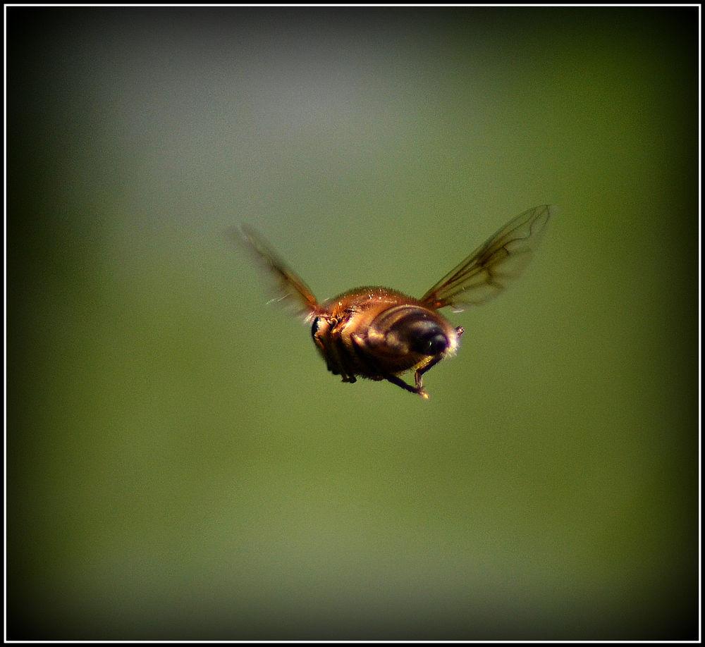 Flight by Simon Bult