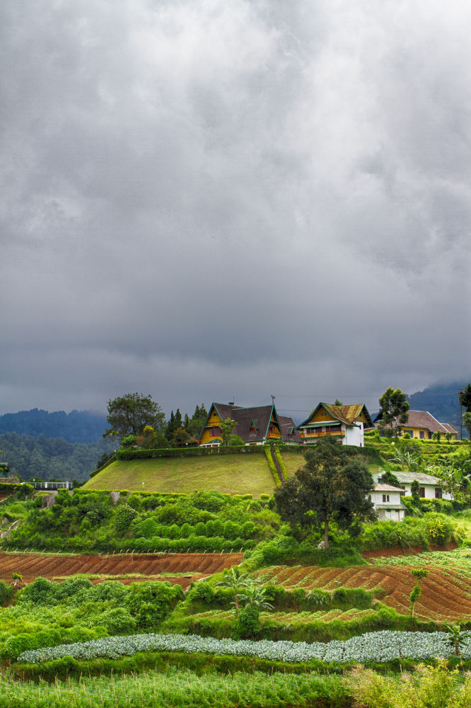 Green Valley by yoyokpoerwedi