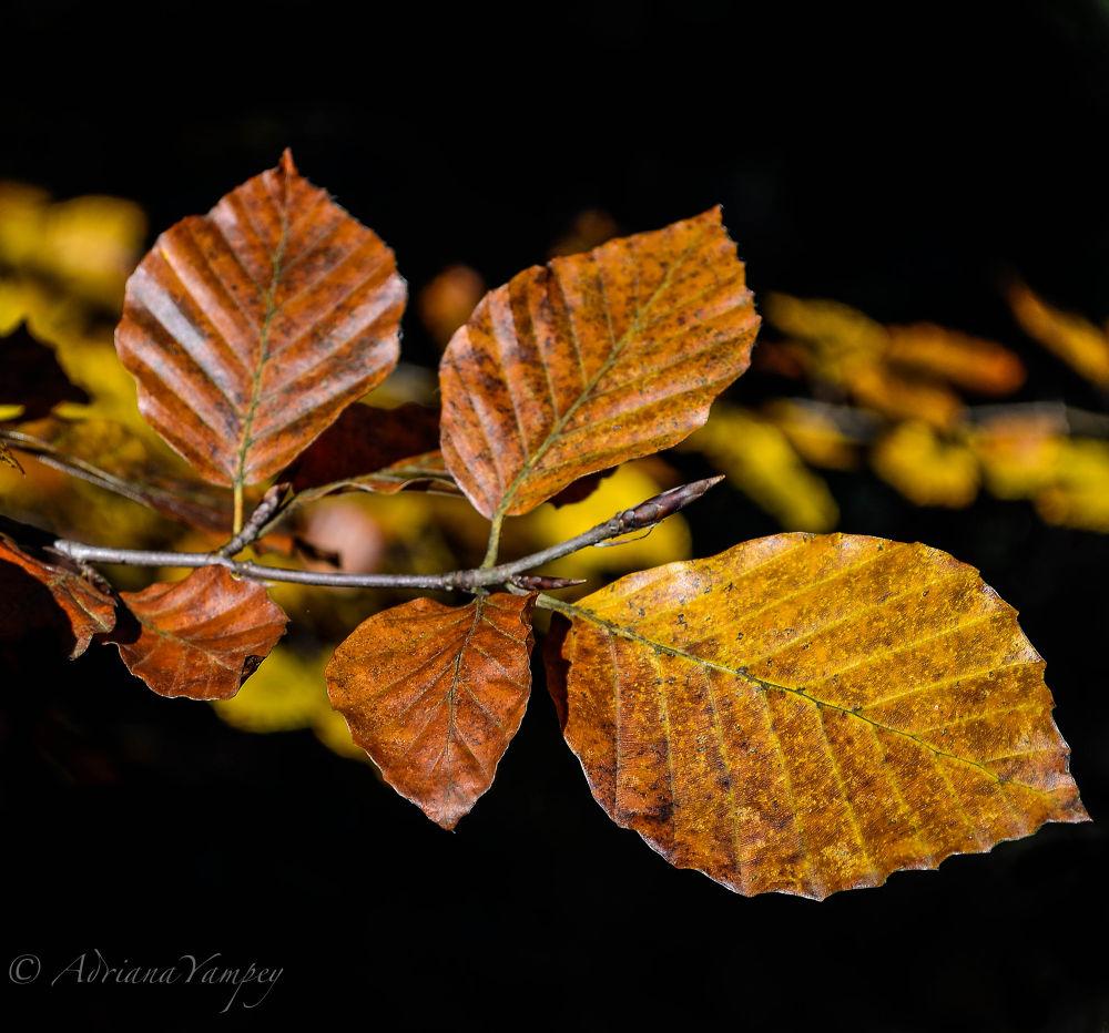 Fall colors by AdiY