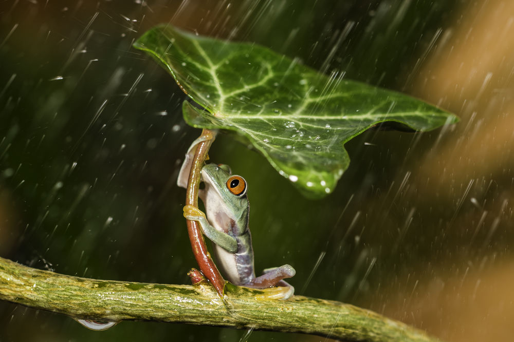 Ohh nooo :( Raining  by kutubuddin777