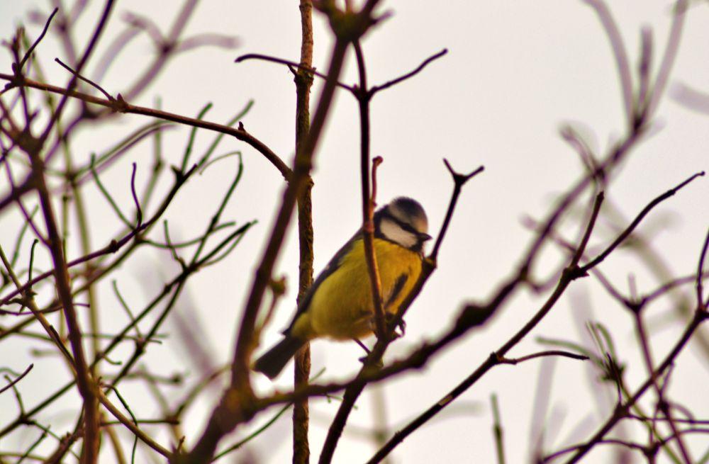 oiseaux - feuilles 015 by murielcharton