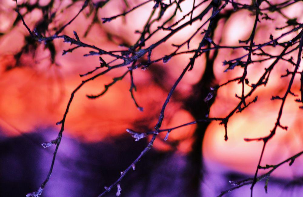oiseaux - feuilles 075 by murielcharton