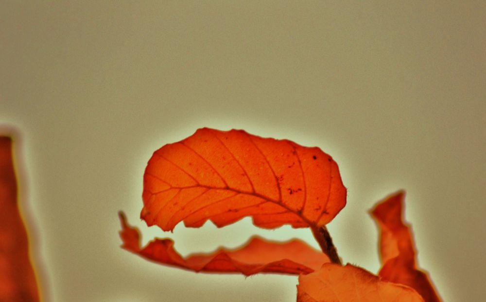oiseaux - feuilles 002 by murielcharton