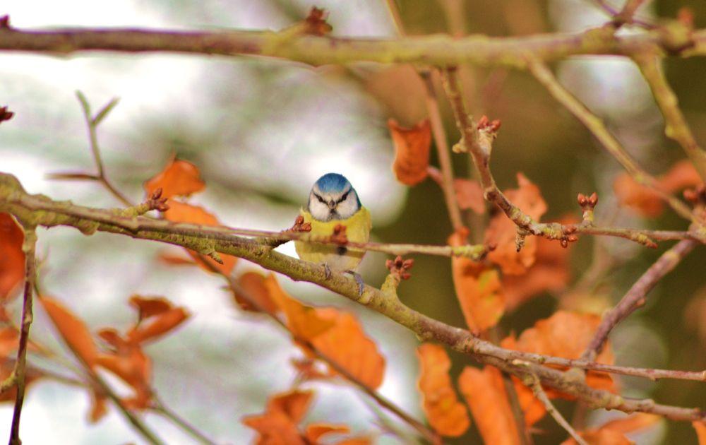 oiseaux - feuilles 004 by murielcharton