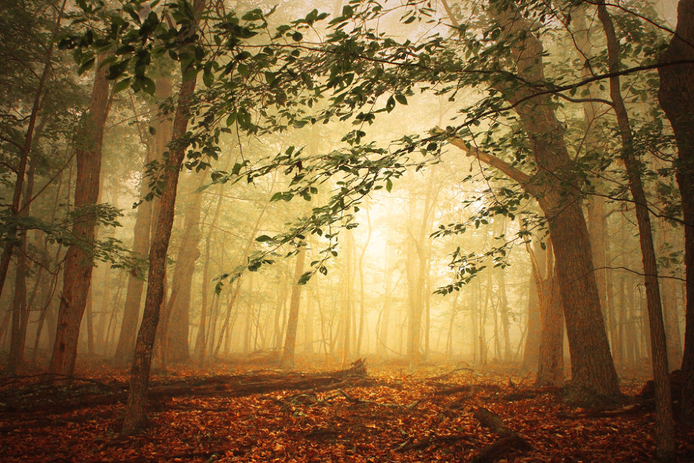 Photo in Nature #light #warm #fog #forest #mood #trees #atmosphere